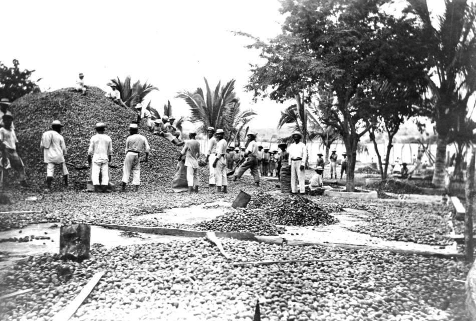tagua-patio-secado